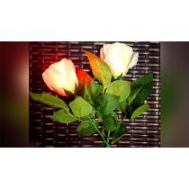 Rose Light set RED by JL Magic
